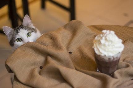 CatCafe Budapest - a cicás társkeresők kedvenc helye